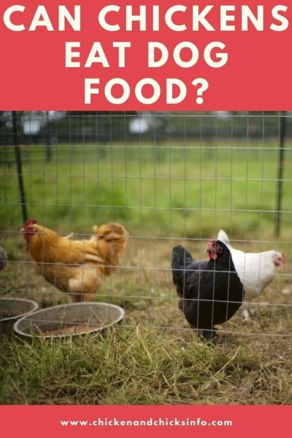 Can Chickens Eat Dog Food