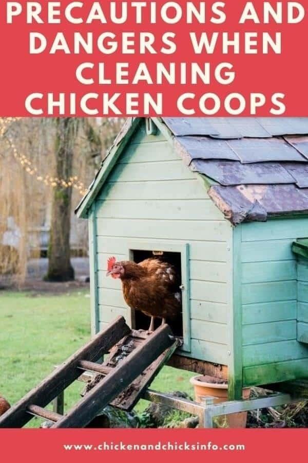Cleaning Chicken Coop Dangers
