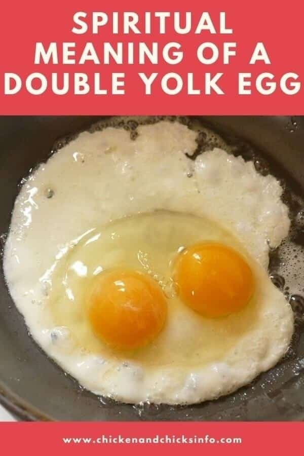 Spiritual Meaning of a Double Yolk Egg