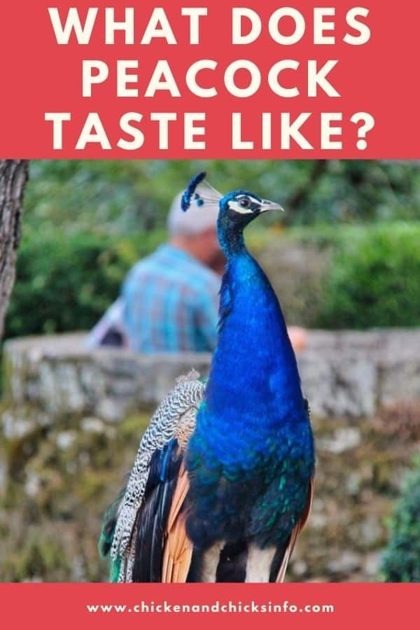 What Does Peacock Taste Like