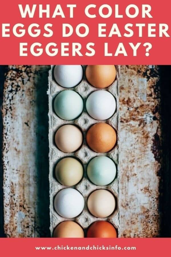 What Color Eggs Do Easter Eggers Lay