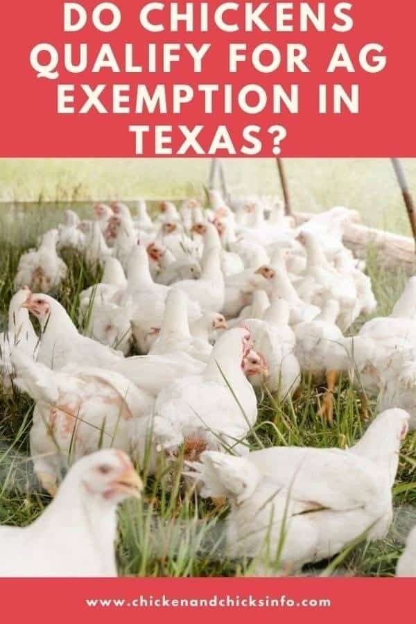 Do Chickens Qualify for AG Exemption in Texas