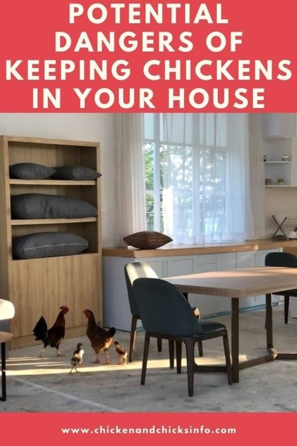Dangers of Keeping Chickens in Your House