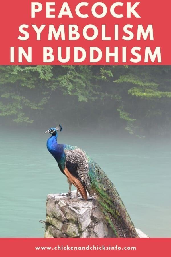Peacock Symbolism Buddhism